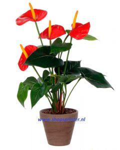 Anthurium groen/rood, H400mm Ø 300, in grijze sierpot