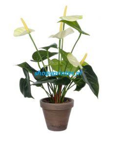 Anthurium groen/wit, H400mm Ø 300, in grijze sierpot